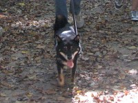 Snickers had SUCH a good time on the hike!