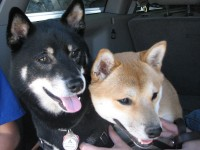 Snickers and Sachi waiting for the rest of the group to arrive