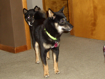 Murphy and Snickers