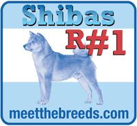 meet the shiba inu