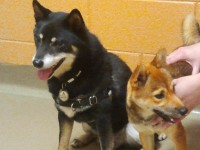 Snick and Zuki shortly after meeting at the shelter