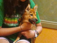 Zuki in Mini Me's lap at the shelter