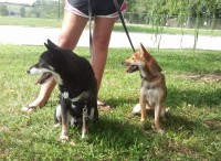 Snick and Zuki, leaving the shelter