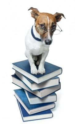 dog on books